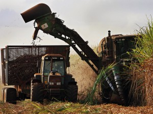 Many are concerned about the future of Brazil's sugar market, which accounts for 20 percent of the world's sugar supply, going into deficit as tough economic conditions ensue