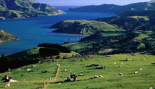 Harbour Asset Management: New Zealand's economy is unshakeable | World Finance