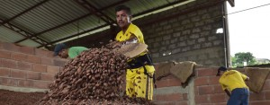 Cocoa farming in Ecuador. A growing appetite for confectionary products in emerging markets such as China and India has opened opportunities up in South America - which has all the right resources for mass cocoa production