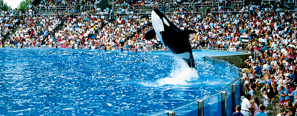 A killer whale show at SeaWorld, Orlando. The film Blackfish, which sheds light on the treatment of the company's animals, has adversely affected its reputation