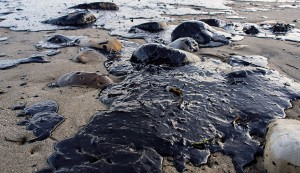 The aftermath of  an oil spill in Goleta, California
