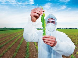 Monsanto is one of the biggest producers of genetically modified organisms in the world