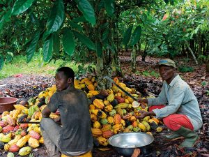 Sweet nothings: what West Africa's COPEC plan means for cocoa farmers